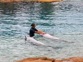 90 - Sea World Dolphin Show
