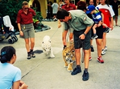 64 - Walking the Tiger Cubs at Dreamworld