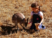 197 - Little girl hand feeds a wallaby
